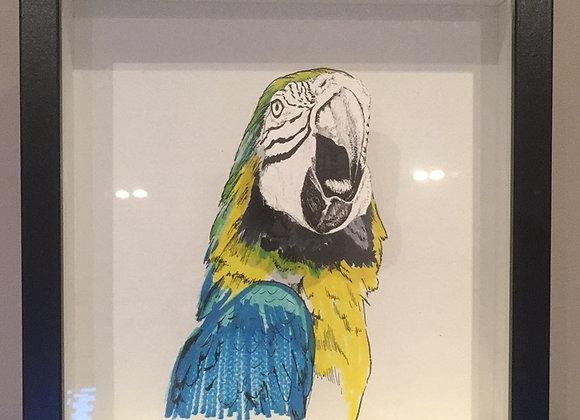 Anamorphic  Parrot
