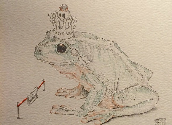 Colour King frog