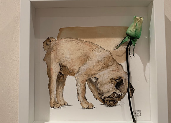 55.Pug and green rose