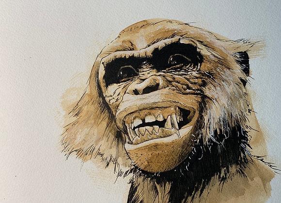 Coffee Chimp