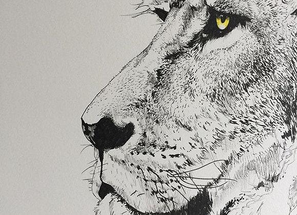Large Lion profile