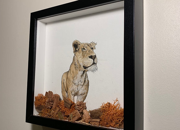 Lioness in coffee