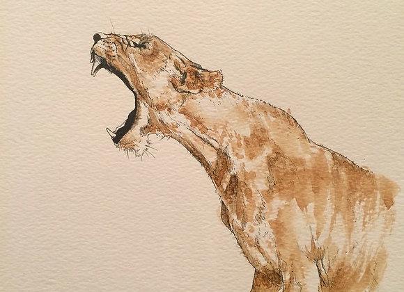 Coffee Lion Roars
