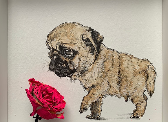 5.Pug pup and red rose