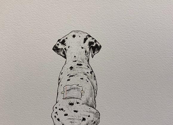 Dalmatian looking