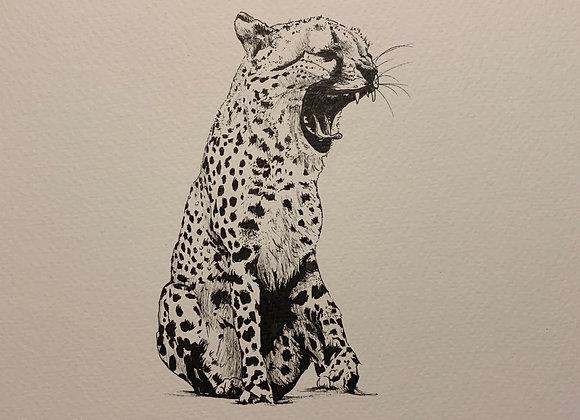 Cheetah roar