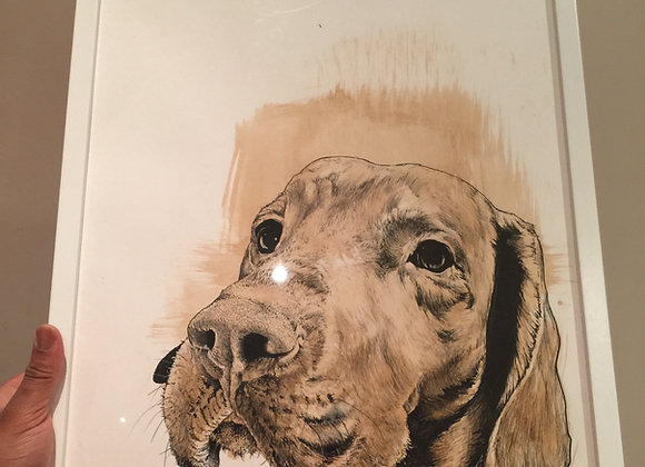 Large hound dog