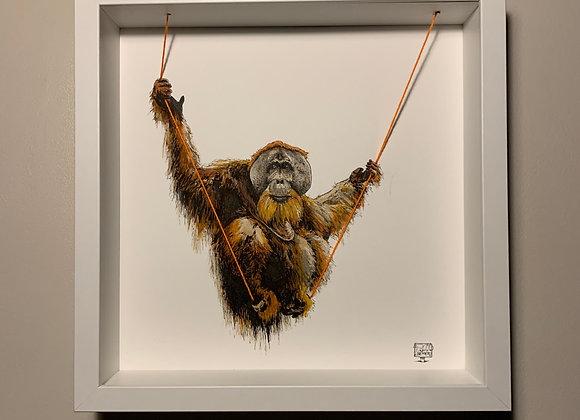 Orangutan swings
