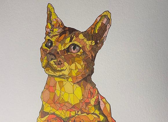 Geo Cat