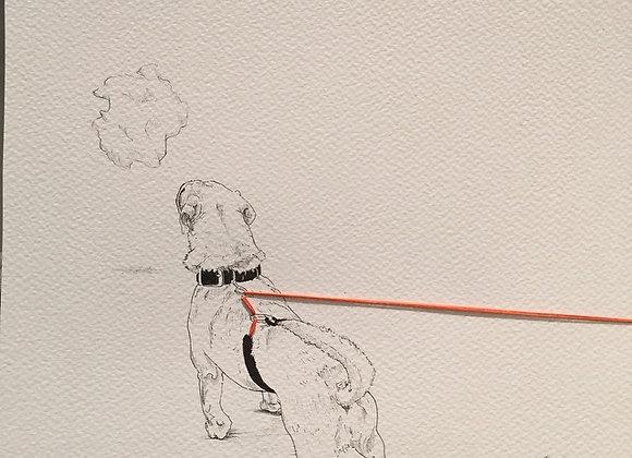 Dog back