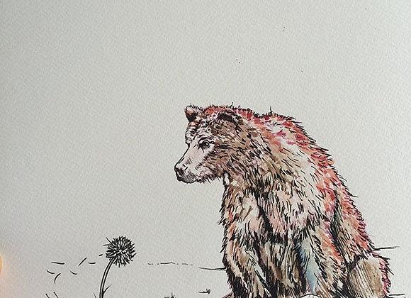 Bear coloured