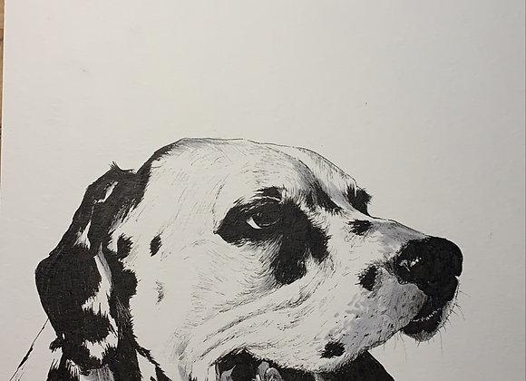 Dalmatian face