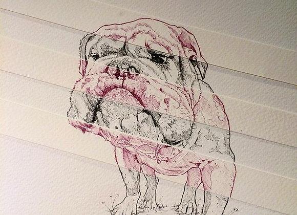 Anamorphic Dog