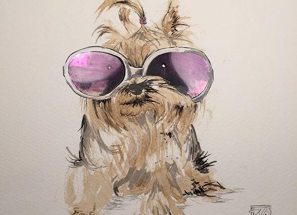 35.Fashion Dog
