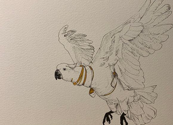 Flying Cuckatoo