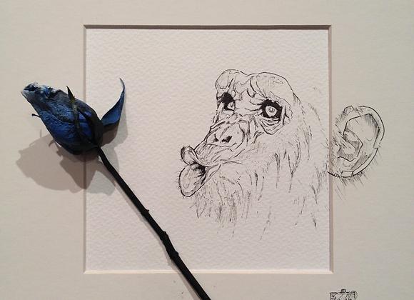 Blue monkey rose