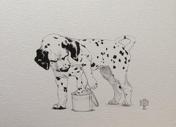 Dog spots Dalmatian