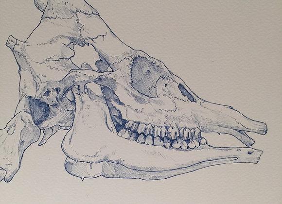 Giraffe skeleton head blue