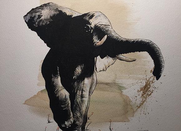 Elephant loves coffee