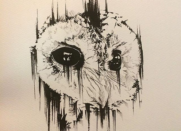 Owl Black eye