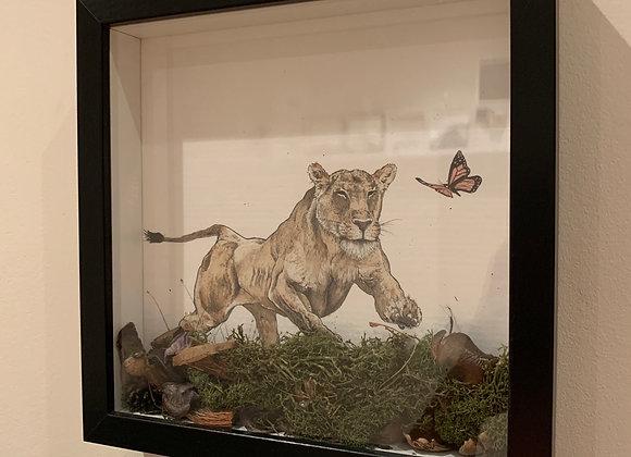Lioness plays