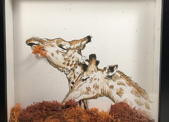 66. Giraffe feeds
