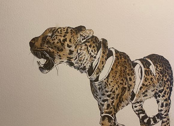 Deconstruct cheetah