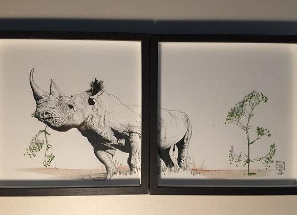 27/28.Rhino eats