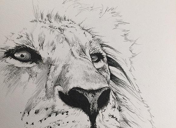 16.Lion stare