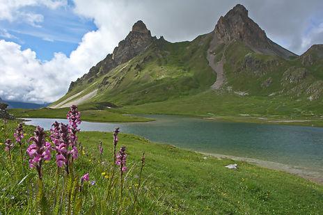 Fleurs de bétoine au lac des Cerces.