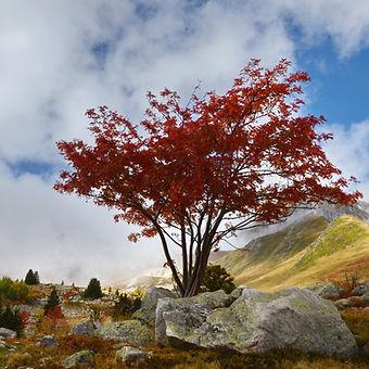 Couleurs d'automne en montant au col de la Madeleine en Maurienne.