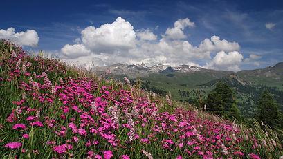 Magie du printemps en montagne.