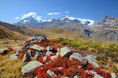 Myrtilliers en feu face aux glaciers de la Vanoise en Haute Maurienne.