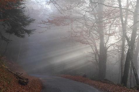 Lumière sur la forêt.