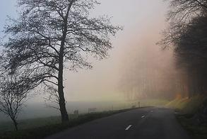 Brouillard matinal en automne.