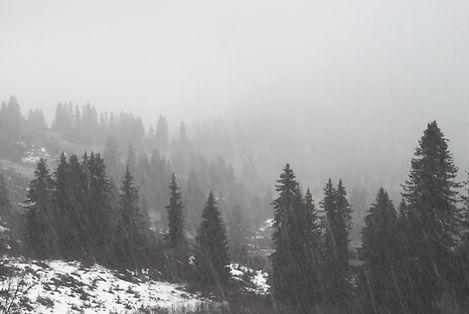 Neige et brouillard sur la forêt.