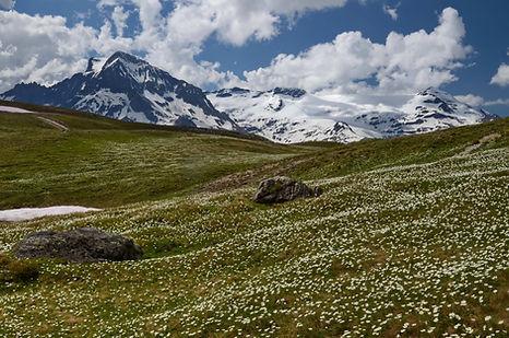 Champs d'anémones face aux glaciers de la Vanoise.
