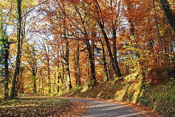 Route des Bauges en automne.