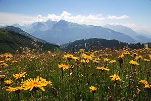 Sur les hauteurs de Morillon en Haute Savoie face au massif des Aravis.2008-07-16-DSC_0187A4-.jpg