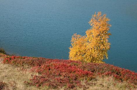 Automne au bord du lac du Mont Cenis.