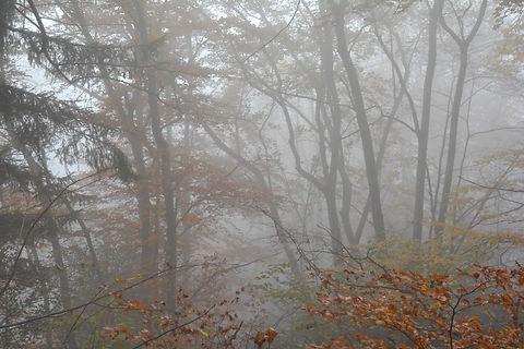 Brouillard d'automne.