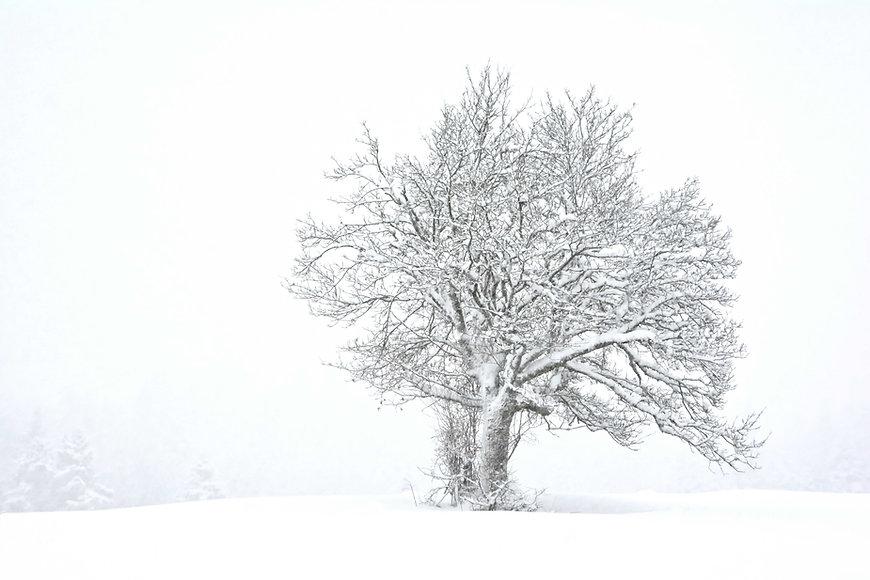 Solitude hivernale en Savoie.