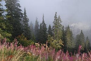 Brouillard d'automne en montagne.