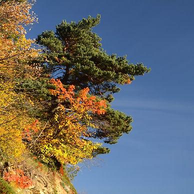 Cramponnés à la montagne en tenue d'automne.