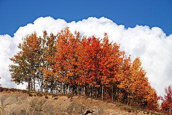 En Tarentaise, les couleurs de l'automne et de la France.