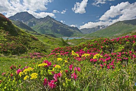 Au Mont Cenis en Haute Maurienne.