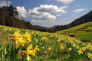 C'est le printemps au Grand Colombier dans l'Ain.