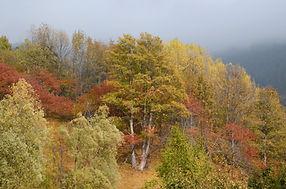 Féerie d'automne en lisière de la forêt.
