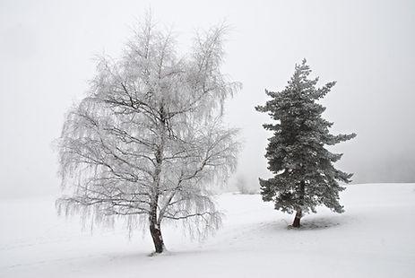 Le blanc et le noir, au Col de Plainpalais dans le massif des Bauges.