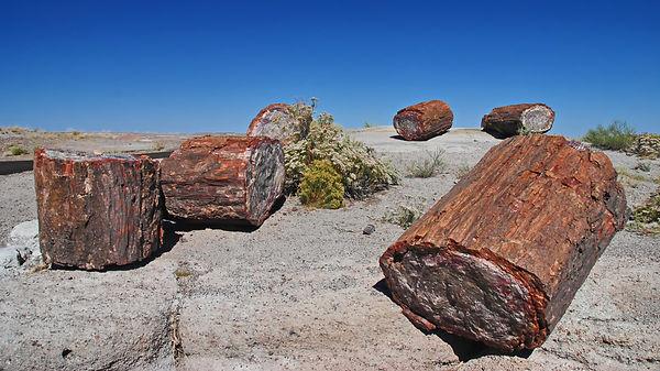Vestiges d'une forêt il y a 200 millions d'années.